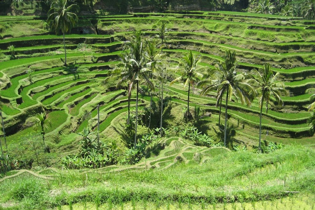 Bali – The Island of Golf